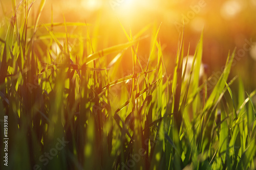 obraz dibond Green grass background