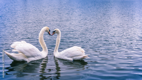 Poster Cygne Swans forming a heart