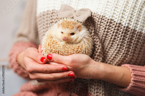 Fotografie, Obraz  Little white hedgehog on a girl's hands over christmas background