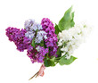 Bunch of fresh lilac