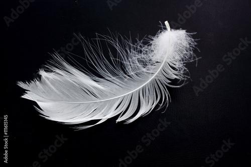 Fotografie, Obraz  plume en mouvement