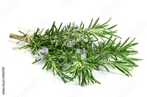 Stampa su Tela bunch of rosemary isolated on white background