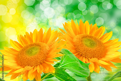 obraz lub plakat Close up of sunflower