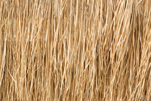 Close Up Yellow Straw Wall Texture Backgrond