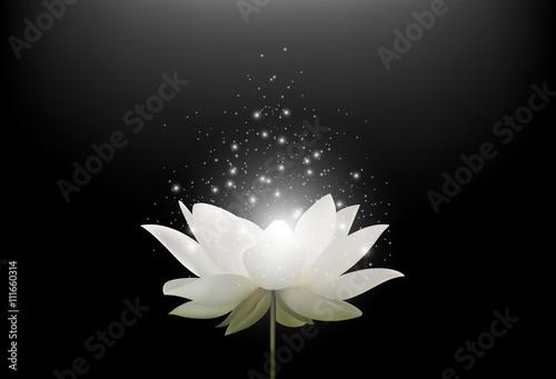 Fototapeta Magiczny Biały Lotosowy kwiat na czarnym tle