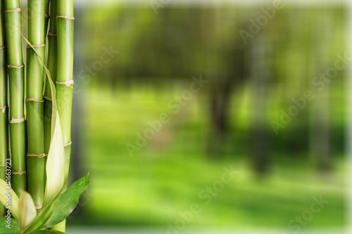 Acrylic Prints Bamboo Bamboo Shoot.