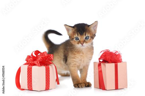 Photo  Cute somali kitten stay near a present box