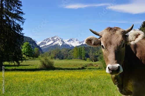 Poster Koe Kopf einer Kuh auf der Alpe im Gebirge