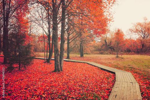 Poster Corail Autumn rural landscape in colored tones