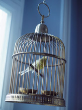 Stuffed Bird In A Cage, Malmo, Sweden.