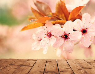 FototapetaEmpty wooden table and blurred blooming tree on background