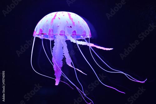 jellyfish Poster Mural XXL