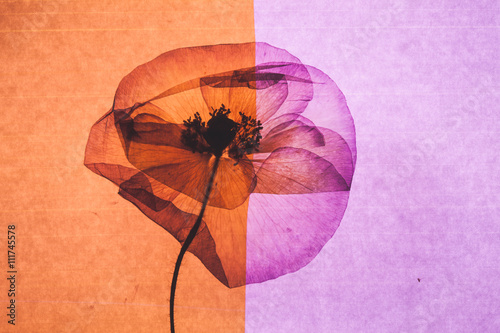 nice flower - 111745578