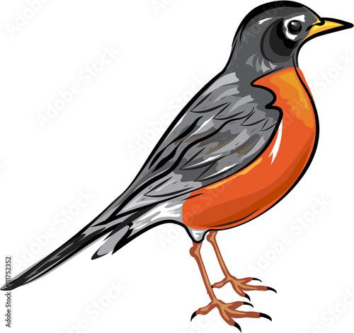 American Robin bird Vector illustration Fototapet
