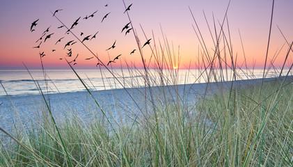 Fototapetamorgens hinter den Dünen, Sonnenaufgang am Meer