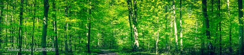 Fotobehang Bossen Green forest panorama in the spring