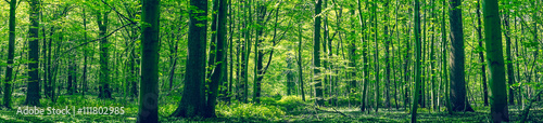 Papiers peints Forets Green forest panorama scenery