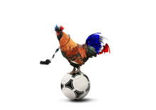 French Colored Rooster With Bi...