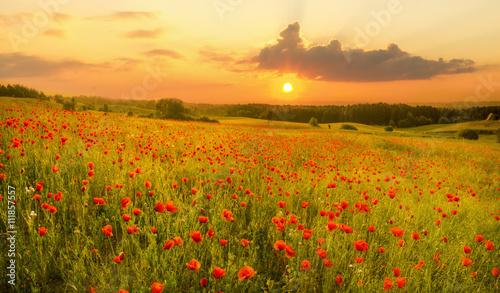 maki-polne-kwiaty