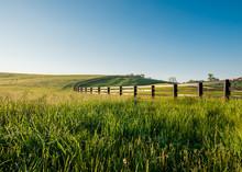 Tall Dewy Grass In Rolling Hills Of Kentucky