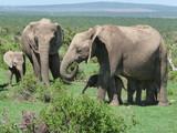 Rodzina słoni ze słoniątkami