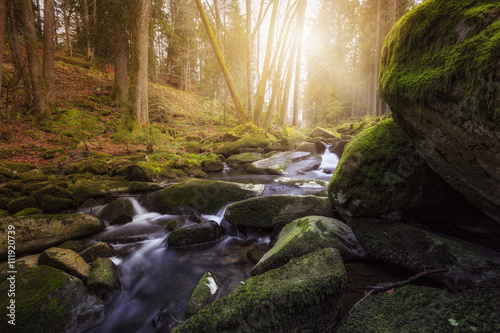 Foto op Aluminium Oranje Lichtstimmung Wald