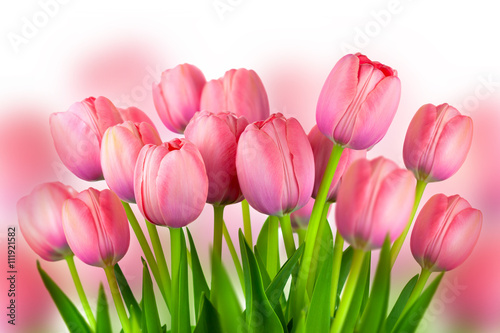 Foto op Plexiglas Tulp Background of Fresh Pink Tulips, spring flowers