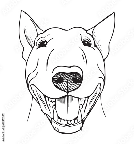 Photo bull terrier funny face