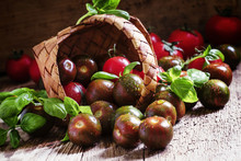 Striped Brown Tomatoes With Basil Spill Out Of A Wicker Basket,