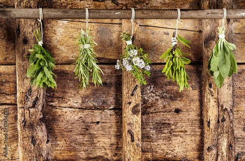 fototapeta na drzwi i meble Five bunches of assorted fresh herbs hanging up