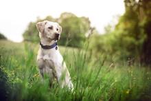 Dog Puppie In Landscape