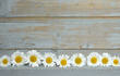 Empty copy space Background of blue painted wood with framework border line of field flowers, daisies