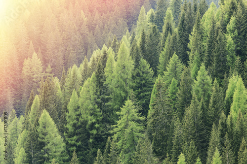 Foto op Canvas Bos Magic forest lit by the sunlight. Coniferous forest region.