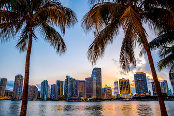 Fototapeta na wymiar Miami, Florida skyline and bay at sunset seen through palm trees