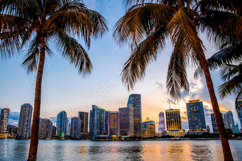 Deurstickers Palm boom Miami, Florida skyline and bay at sunset seen through palm trees