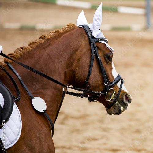 Fotografía  Horse-Portrait