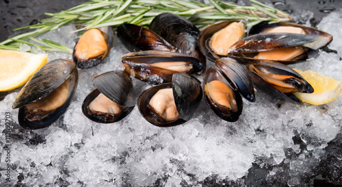 Fresh crude seafood. Mussels in a cockleshell Canvas Print