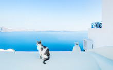 Cat Against Blue Sky And Sea I...