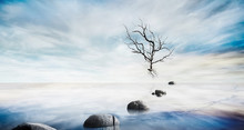 Beautiful Sea Level With Fantasy Sky And Stone, Dead Tree For Composite Backgrounds, Zen Concept
