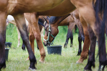 Horse Feeding On The Meadow