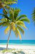 Beach with palm trees, caribbean sea, Cayo Levisa, Cuba