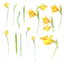 Watercolor Collection With Spring Yellow Flowers. Daffodils And Lilies. Hand Painting Floral Illustration. Elements Are Isolated .