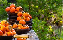 Orange Persimmon Kaki Fruits In Clay Plates. Garden