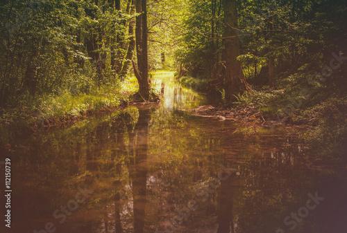 Foto op Canvas Weg in bos Mysterious landscape in the woods.