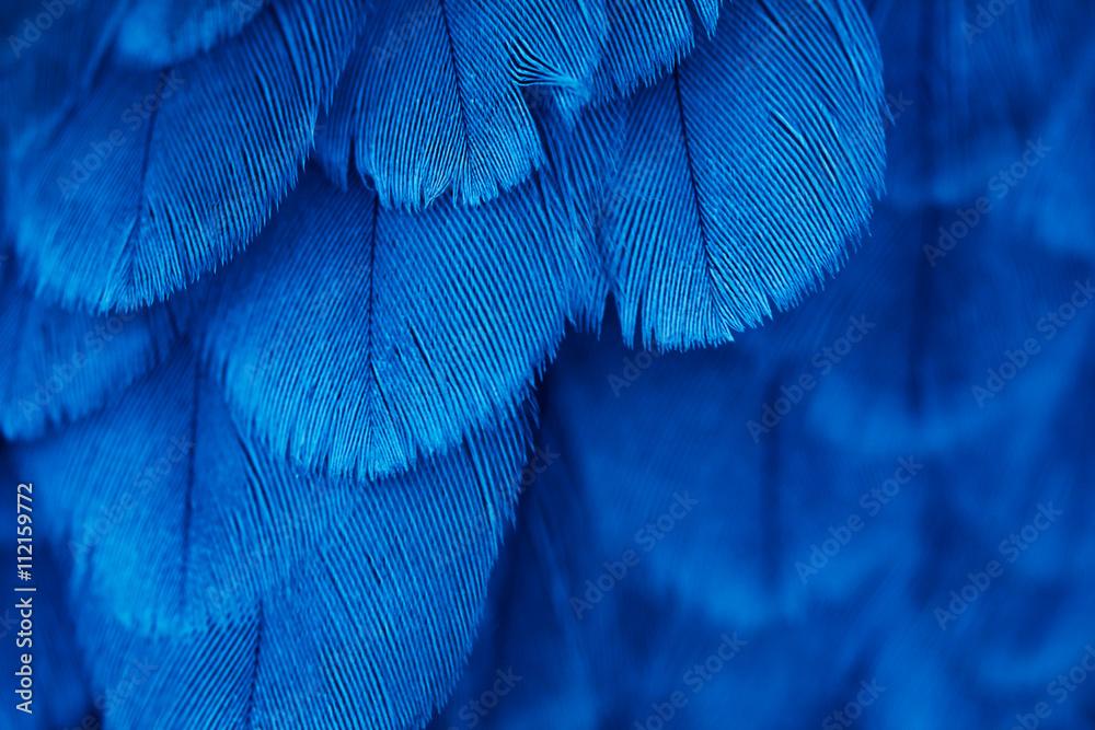 plumage background