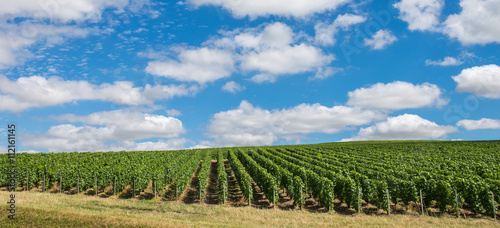 Tuinposter Canyon Vineyard landscape in France
