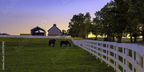 Valokuva  Horse farm at dawn