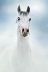 Obraz na płótnie Canvas siwy koń