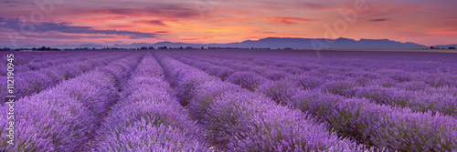 Photo  Sunrise over fields of lavender in the Provence, France