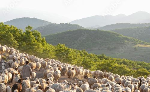 Poster de jardin Vache zirvedeki dağlarda çoban ve koyun sürüleri